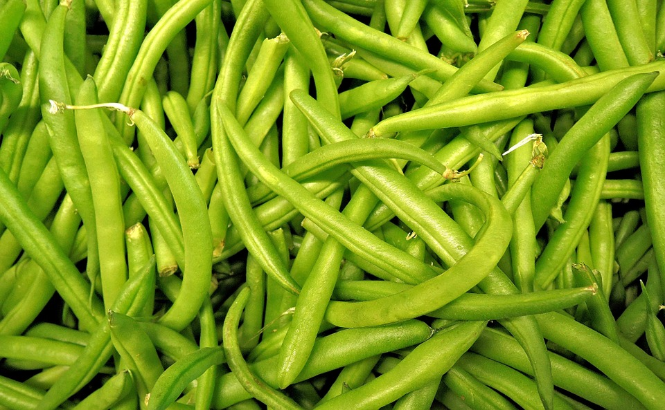 Determining Cooling Rates of Snap Beans